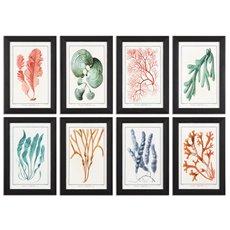 Uttermost Colorful Algae Framed Art, S/8
