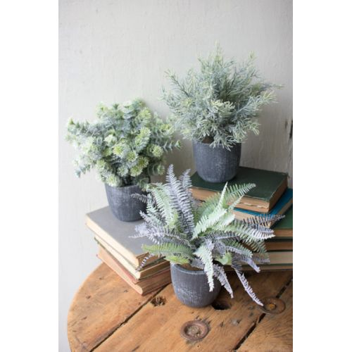 Fern Succulents With Round Grey Pots Set of 3