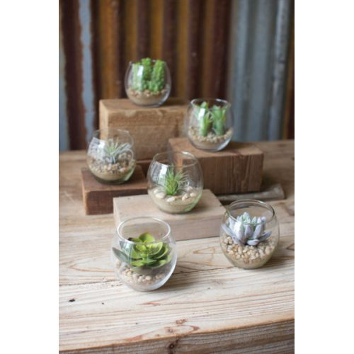 Succulents With Glass Containers Set of 6