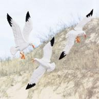 Gulls In Flight Wall Decor (Set Of 3)