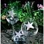 Starfish Glasses