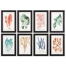 Uttermost Colorful Algae Framed Art, S/8