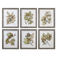Uttermost Seedlings Framed Prints S/6