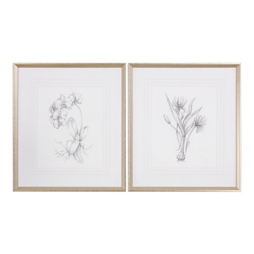 Uttermost Botanical Sketches Framed Prints S/2