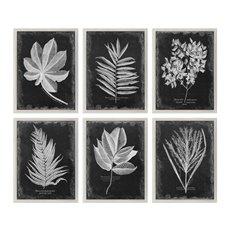 Uttermost Foliage Framed Prints, S/6