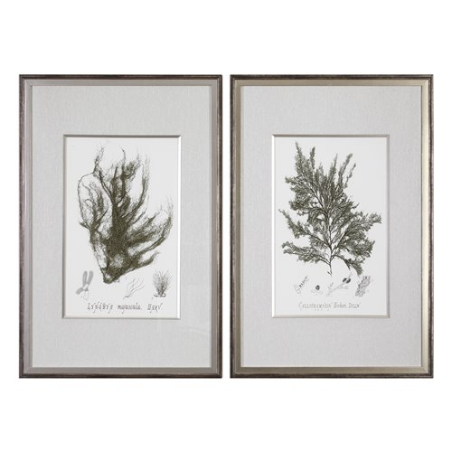 Uttermost Sepia Seaweed Prints S/2