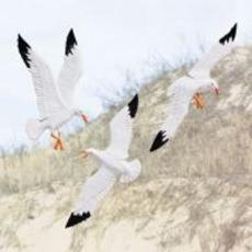Gulls In Flight Wall Decor (Set Of 3)