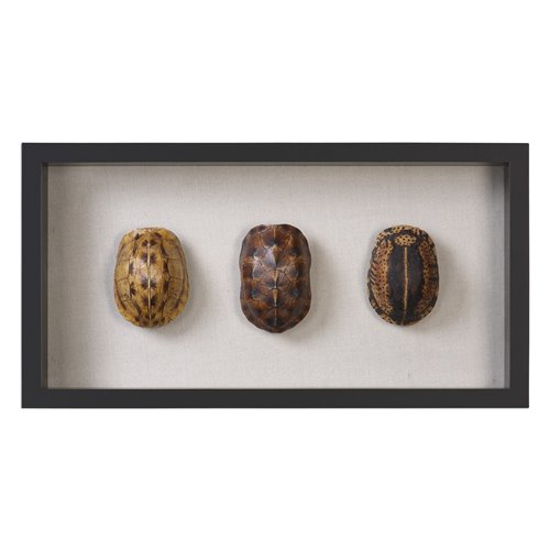 Uttermost Tortoise Shells Shadow Box